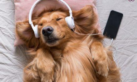 СПОТИФАЈ НАПРАВИ ЛИСТИ НА ПЕСНИ ЗА ДА ГИ СЛУШААТ КУЧИЊАТА КОГА СЕ САМИ ДОМА